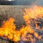 За сжигание травы предусмотрен штраф